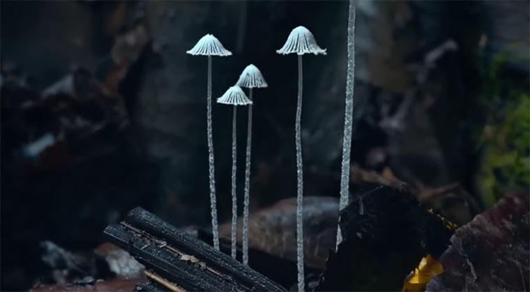 Wachsende Pilze im Zeitraffer Mushroom-Timelapse