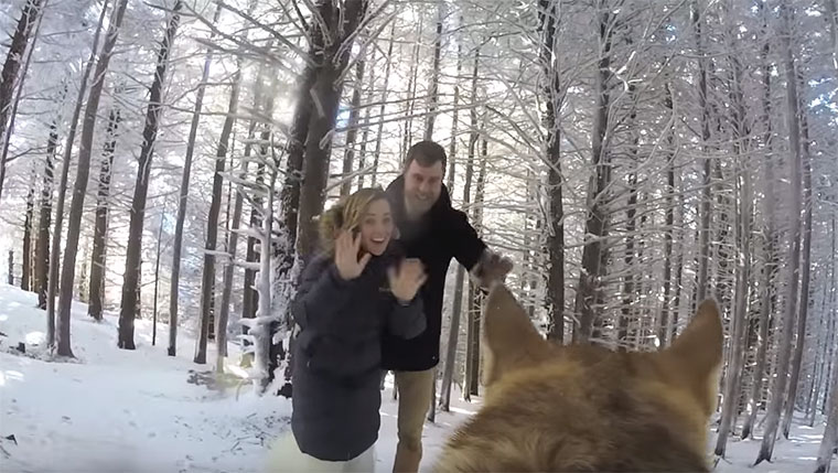 Hund filmt Hochzeit
