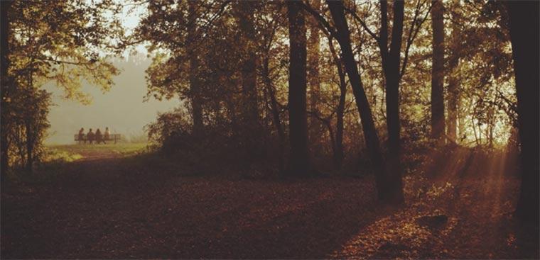 4 Minuten niederländischer Herbst