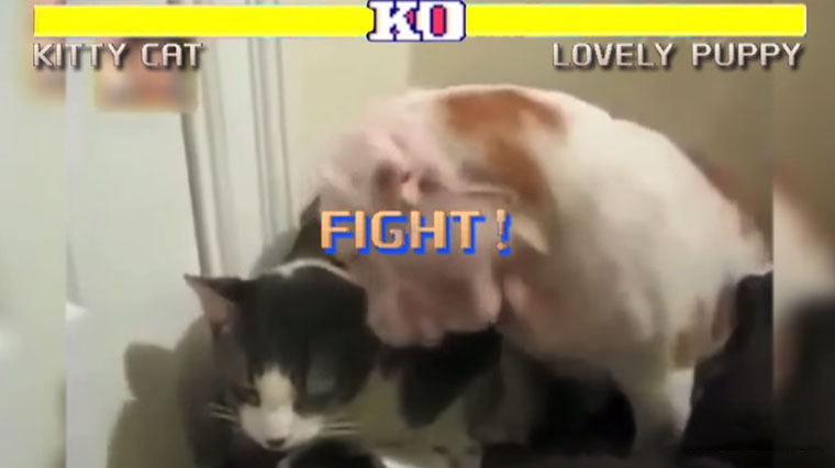Street Fighter: Cats Edition Street-Fighter-Cat-Edition