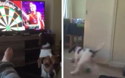 Hund-Darts-TV