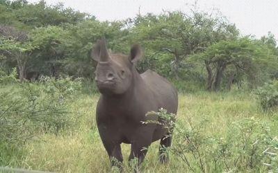 tierisch-suedafrika_01