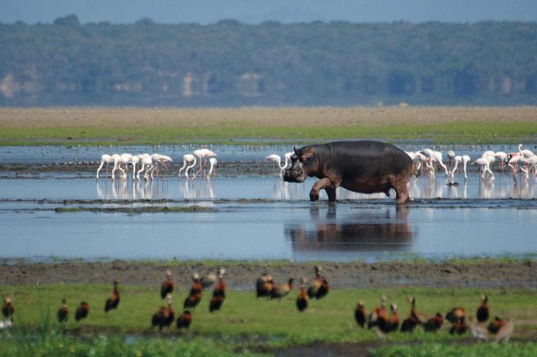 Erstaunlich leicht: Nashorn auf den Arm nehmen tierisch-suedafrika_02
