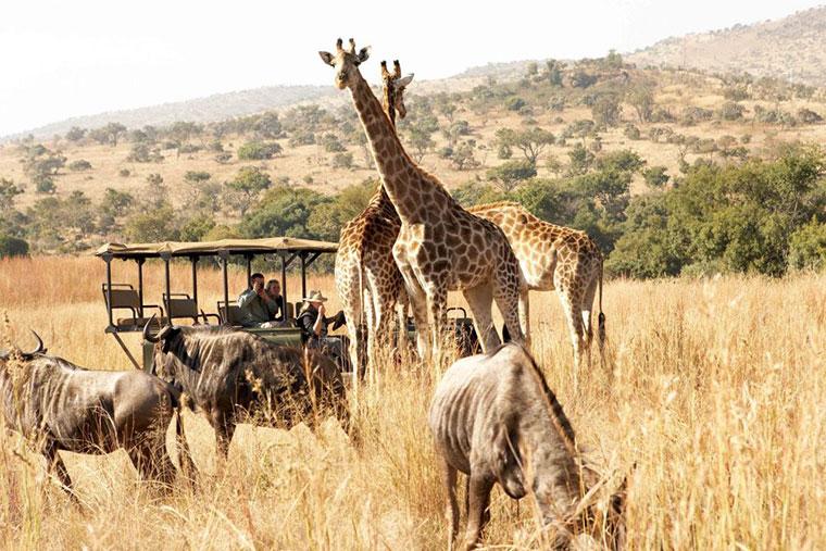 Erstaunlich leicht: Nashorn auf den Arm nehmen tierisch-suedafrika_03