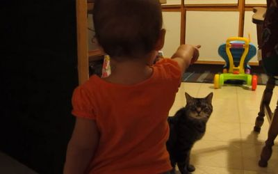cat-and-baby-talk