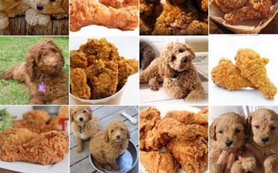 dog-or-food_01