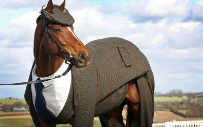 horse-suit