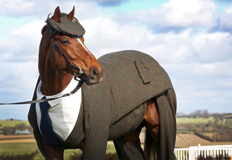 Dieses Pferd hat mehr Style als Du horse-suit