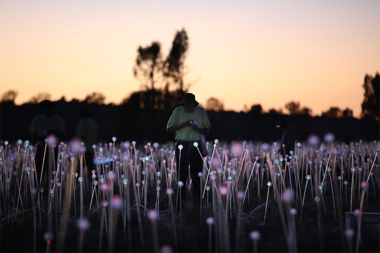50.000 Lichter in der australischen Wüste Field-of-light_03