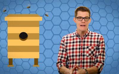 How-do-bees-make-honey