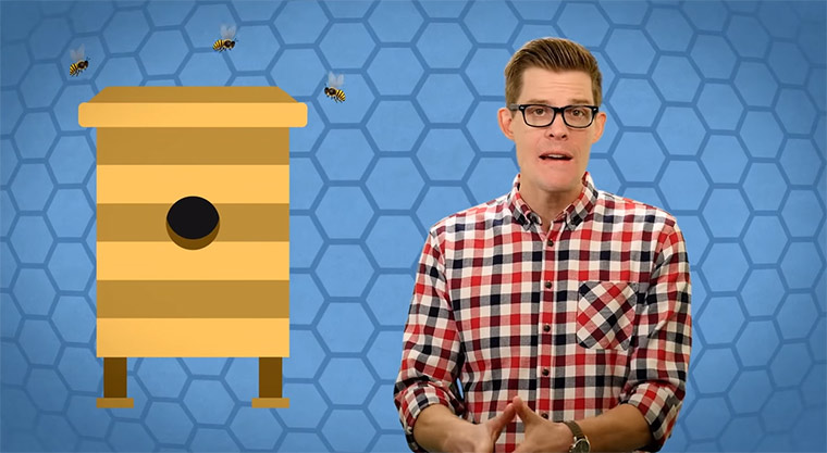 How-do-bees-make-honey