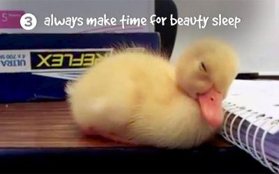 life-lessons-ducks