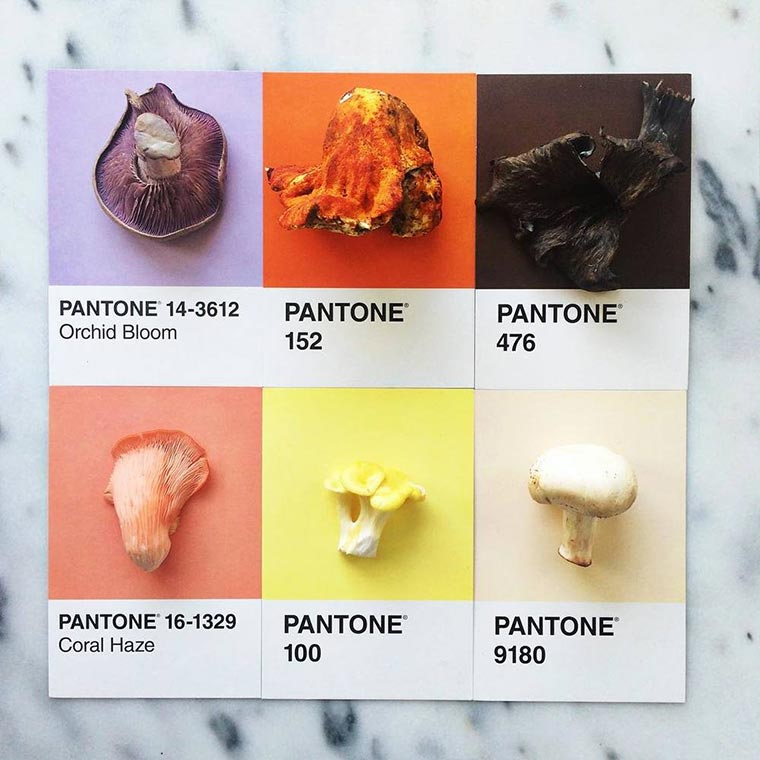 Nach Pantone geordnetes Essen pantone-posts_02