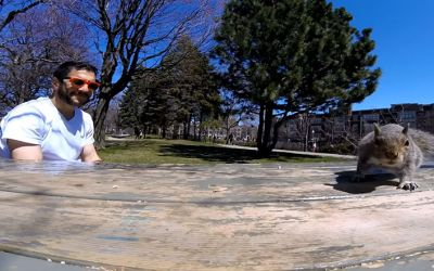 squirrel-steals-gopro