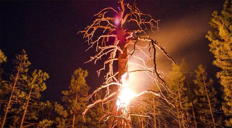 Timelapse eines ausbrennenden Baumes