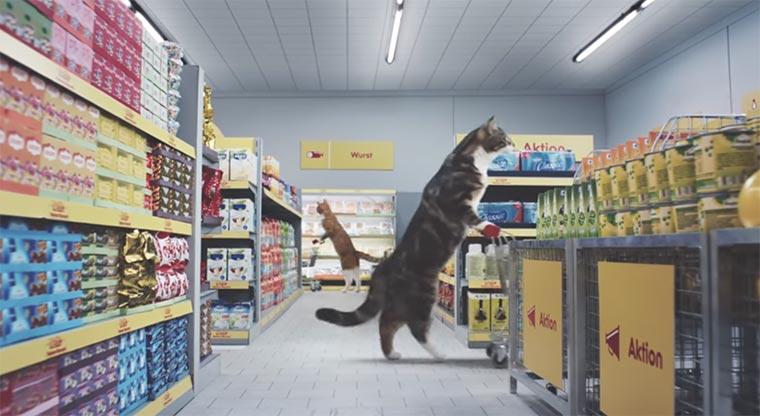 Ein Supermarkt voller Viral-Katzen netto-katzen_01