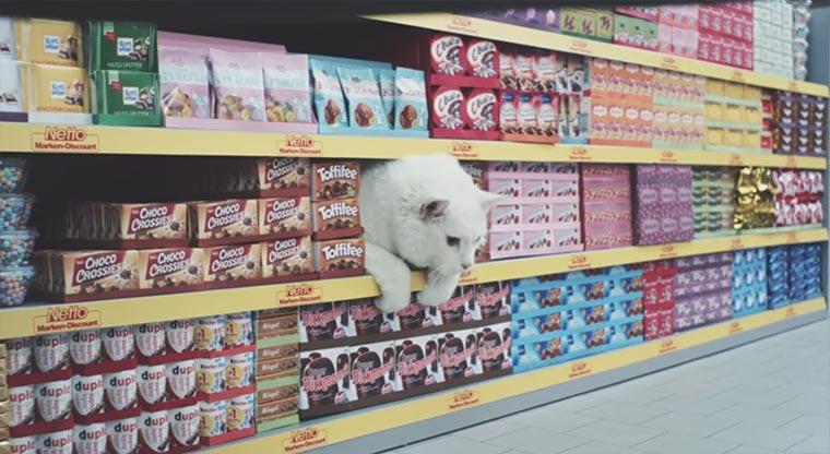 Ein Supermarkt voller Viral-Katzen netto-katzen_02