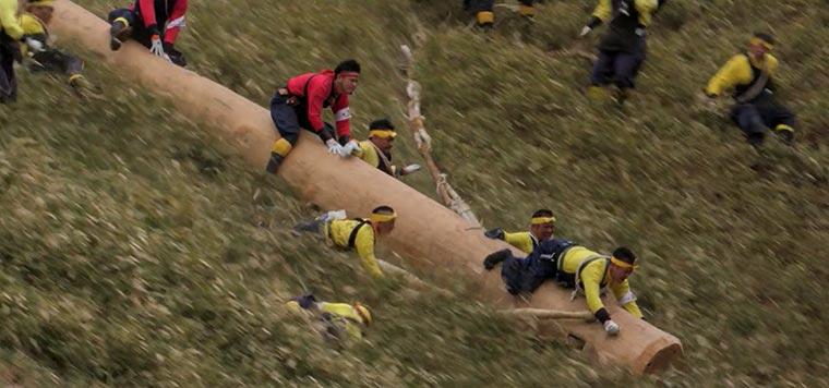 In Japan rutschen sie auf riesigen Baumstämmen einen Hang herunter