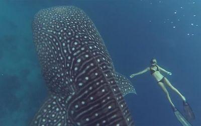 ocean-ramsey-whale-shark