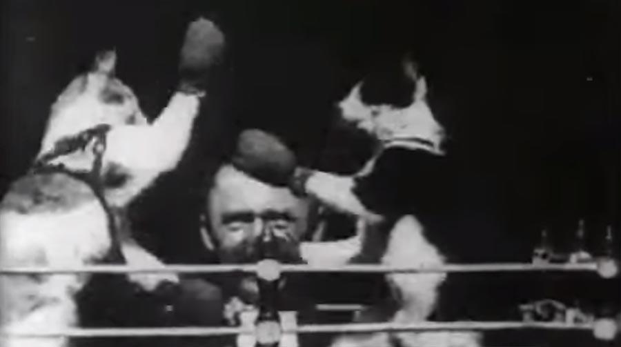 Hat Thomas Edison das erste Katzenvideo überhaupt gemacht? boxing-cats