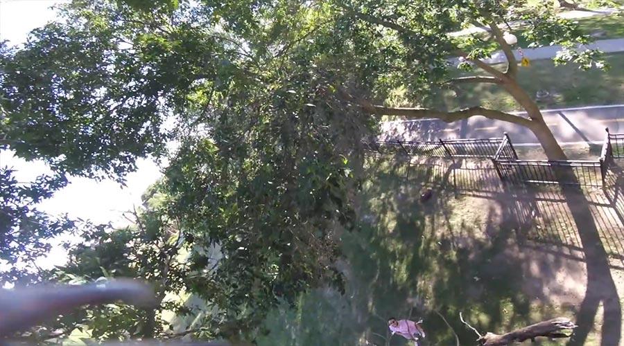 Eichhörnchen klaut mal wieder eine GoPro