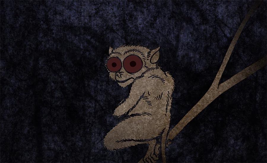 Wie können Tiere nachts sehen?