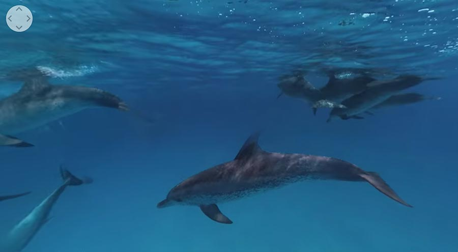 Per 360°-Video mit Delphinen schwimmen