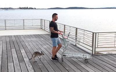 Känguru als Haustier und bester Freund