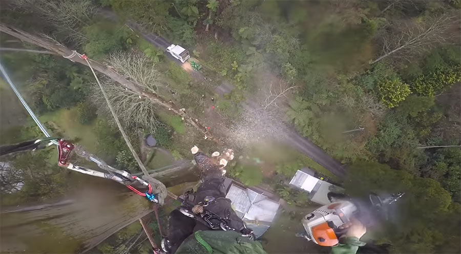 POV-Stutzfällung eines 50m-Baumes baumfaellen-pov