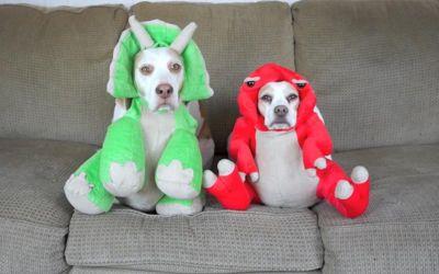 Maymo & Penny tragen 17 Hundekostüme