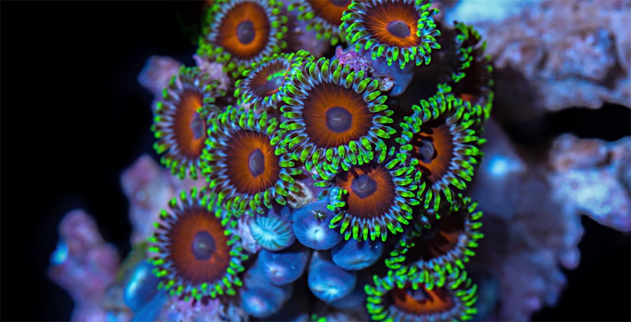 Makro Korallen-Timelapse makro-korallen