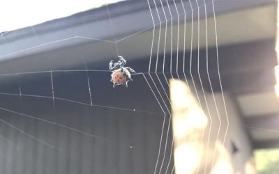 Einer Spinne beim Spinnen zuschauen