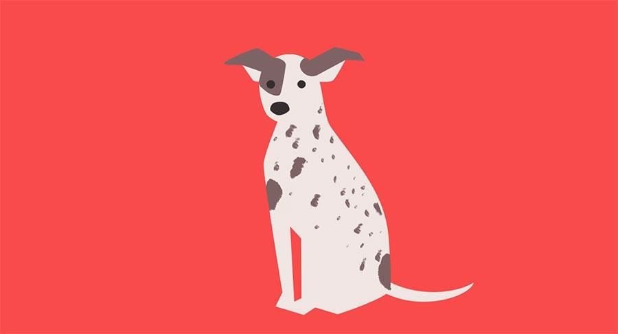 Woher kommen eigentlich Hunde?
