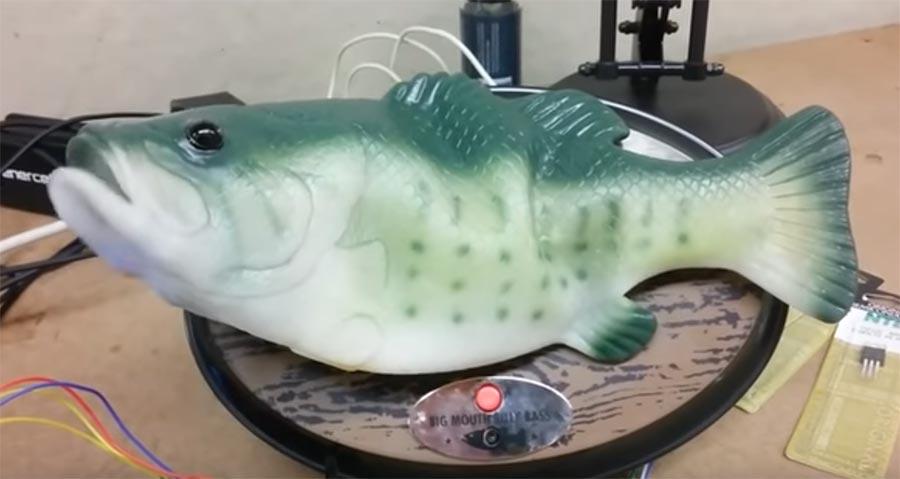 Alexa spricht aus einem Roboter-Fisch alexa-fish