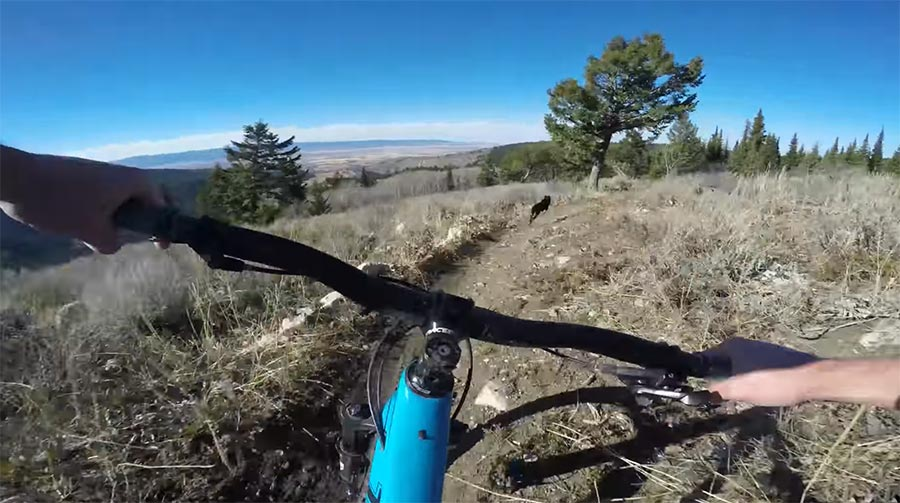 Downhill: Hund vs. Mountainbike