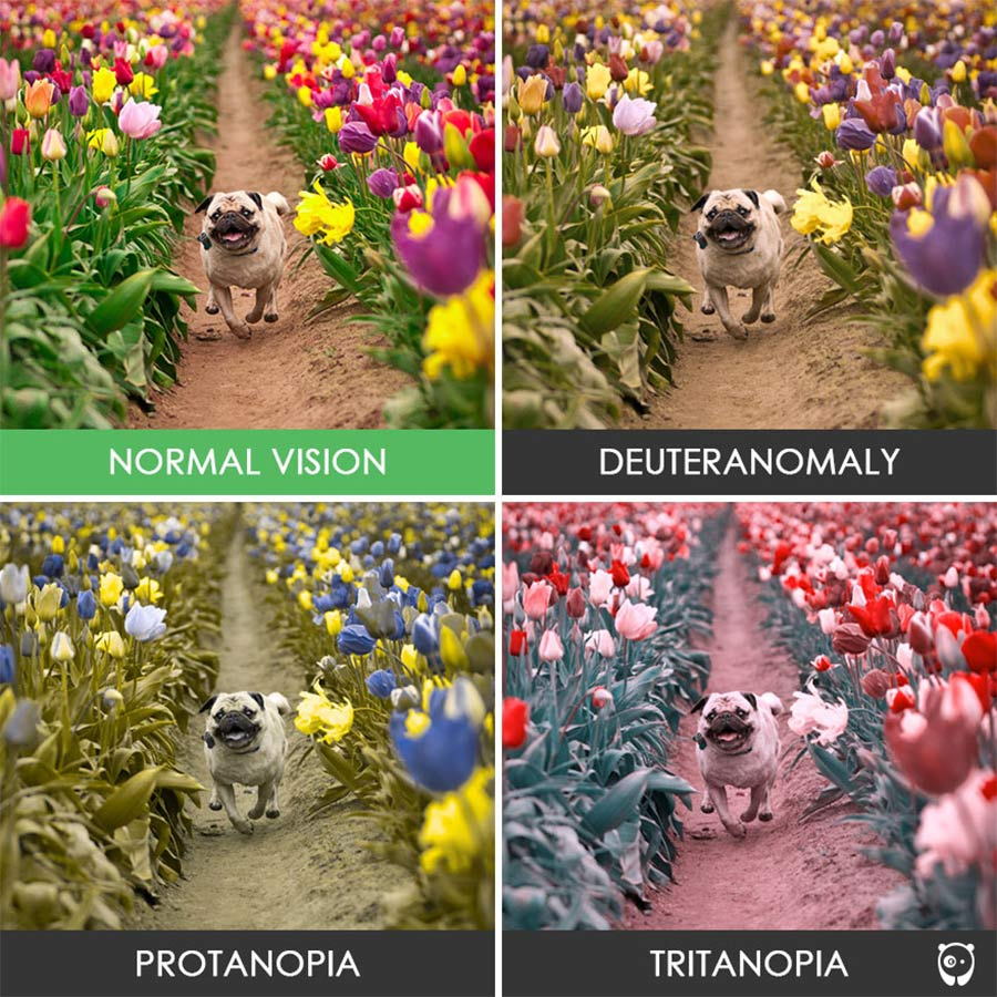 So sehen Farbenblinde die Welt colorblindness_07