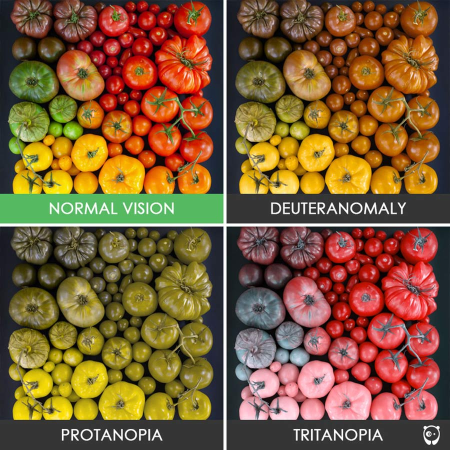 So sehen Farbenblinde die Welt colorblindness_12