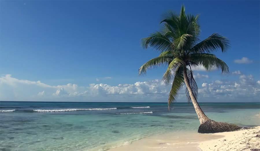 Drei Stunden tropische Palme am Weißstrand