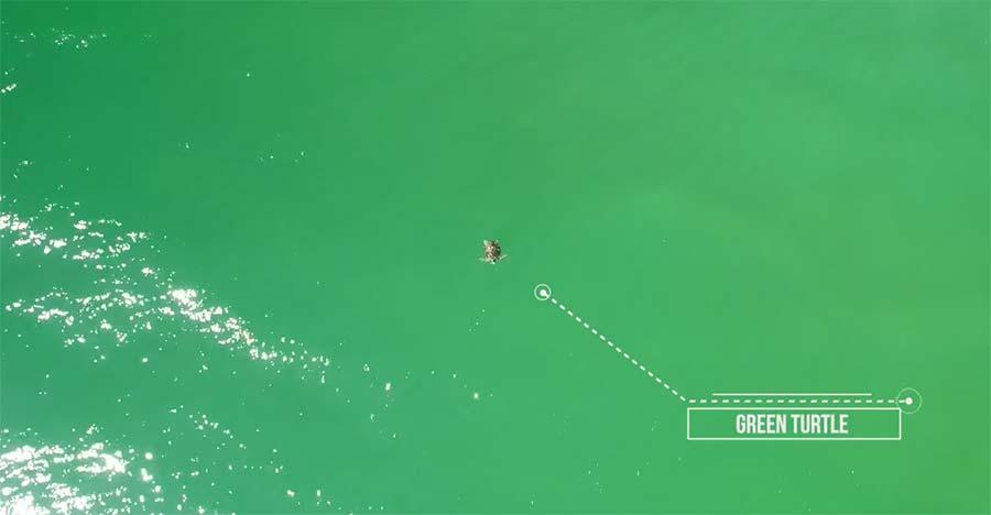 Drohne entdeckt lauter Meeresbewohner