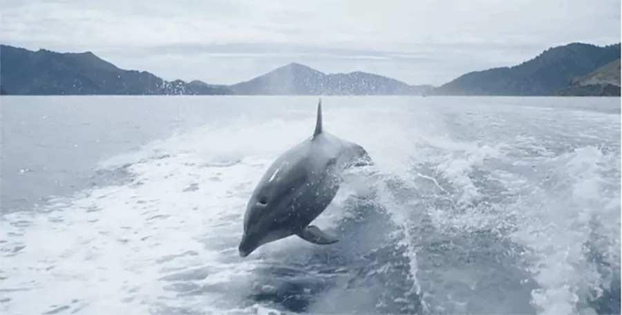 Ein paar Zeitlupen-Delphine