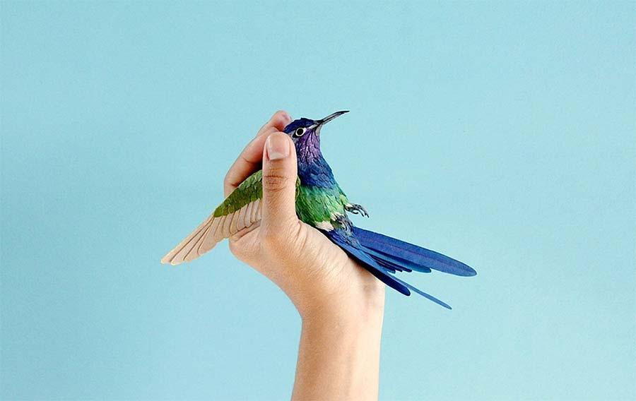 Neue Papiervögel von Diana Beltran Herrera diana-beltran-herrera-2_01
