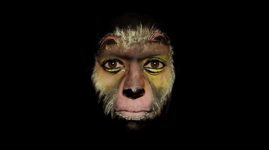 Die Evolution auf dem Gesicht durchgespielt