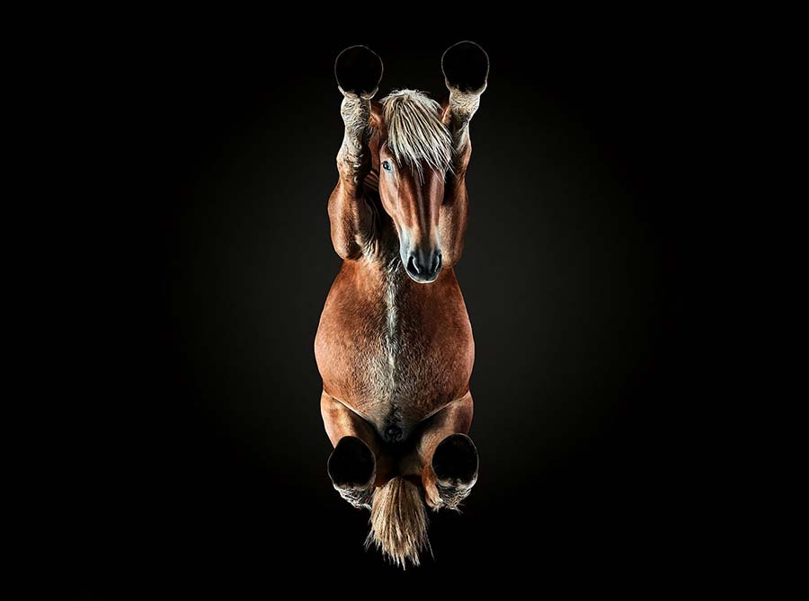Tiere von Unten underlook-Andrius-Burba_01