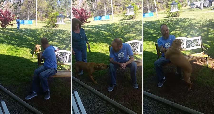 Hund erkennt 25kg leichteres Herrchen erst nicht und dreht dann vor Freude durch Dog-Excited-to-Be-Reunited-with-Owner