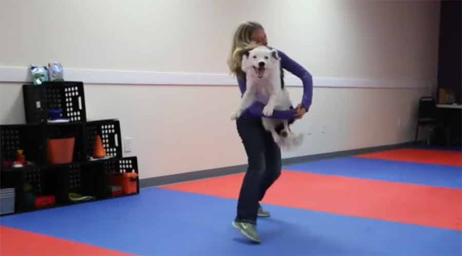 Klasse Tanzroutine mit Hund Ive-Got-Faith-Canine-Freestyle-Routine