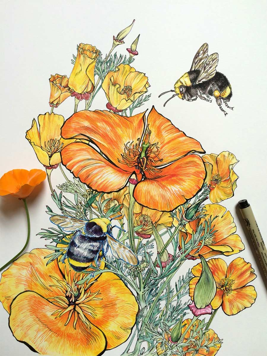 Zeichnungen: Noel Badges Pugh Noel-Badges-Pugh_02