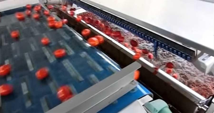 Die abartige Präzision einer Tomaten-Sortiermaschine