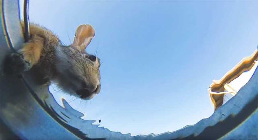 Ein heißer Tag aus der Sicht eines Wassereimers the-bucket-pov