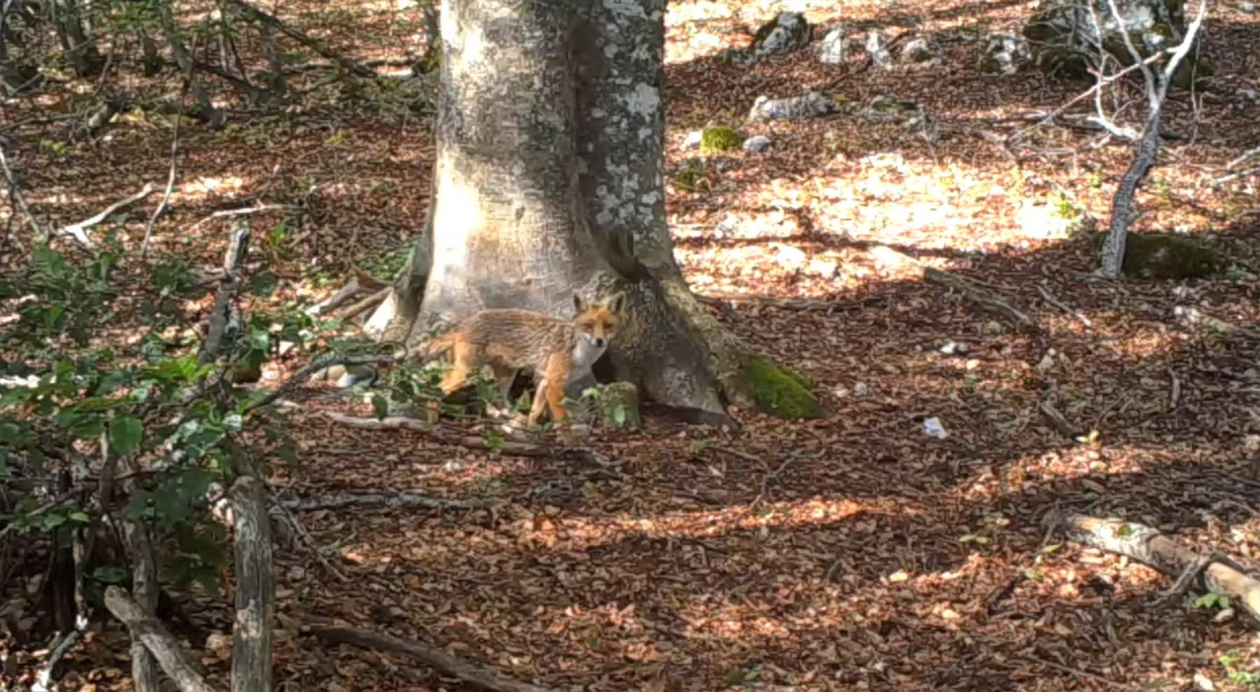 Was ein Baum im Wald binnen eines Jahres so erlebt
