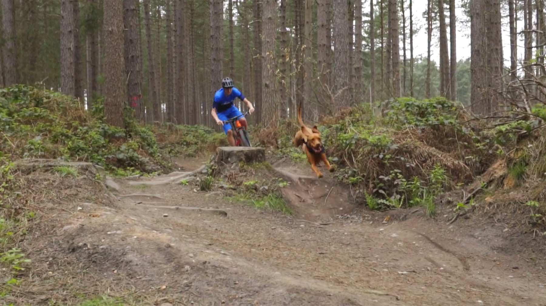 Mit dem Hund die Mountainbike-Strecke abrasen